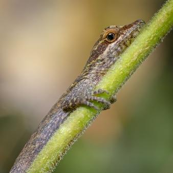 Jaszczurka spoczywająca na gałęzi 0