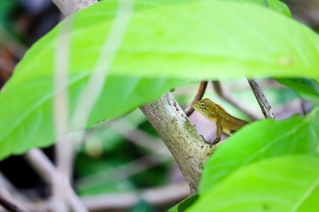Jaszczurka ukrywa się pod krzakiem, aby uciec przed łowcą