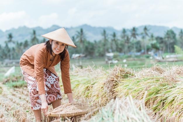 Jawajskie rolniczki kłaniają się, przynosząc uprawę ryżu za pomocą tkanych bambusowych tac na polach