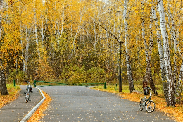 Jazda na rowerze w lesie jesienią. spacer rowerem wśród wspaniałych brzóz pokrywa jesienne żółte liście.