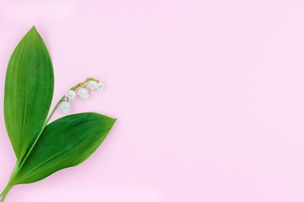 Jeden biały kwiat konwalii na różowym tle.