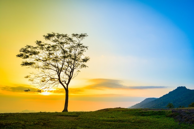 Jeden drzewo na skłonu wzgórza halnym pięknym wschodzie słońca z drzewnego samotnego zmierzchu nieba żółtym błękitnym b