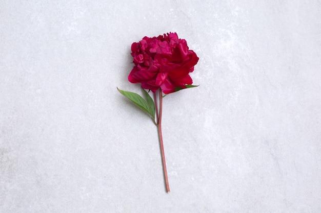 Jeden duży czerwony kwiat piwonii na kamiennym biurku