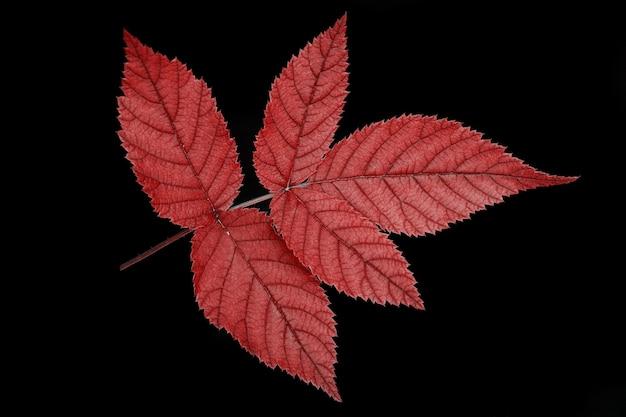Jeden liść to drzewo koloru czerwonego