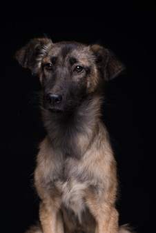 Jeden pies kundel na czarnym tle. studio strzał