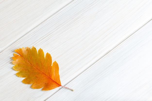 Jeden pożółkły liść krzewu na białym drewnianym tle minimalistyczne jesienne tło