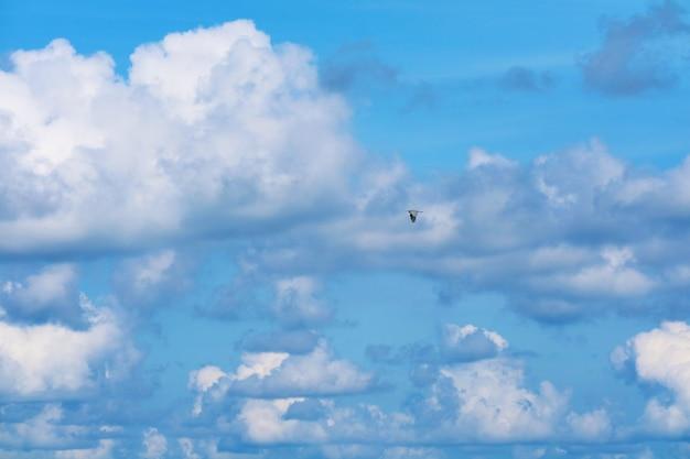 Jeden ptak leci na czystym, błękitnym niebie kupie białej chmury na morzu
