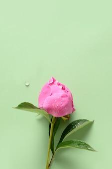 Jeden różowy kwiat piwonii na zielonym tle.
