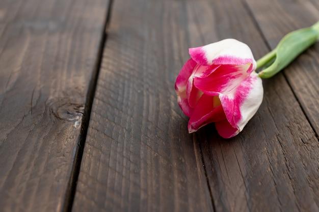 Jeden różowy tulipan na starej nieociosanej drewnianej ścianie