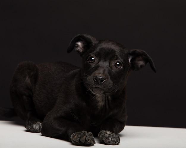 Jeden szczeniak kundel psa na czarnym tle. studio strzał