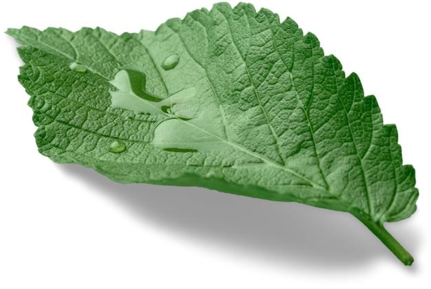 Jeden zielony liść mięty z kroplą wody z bliska na białym tle