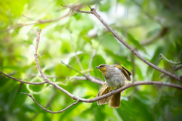 Jeden żółto-zielony ptak wyciągał nogi na suchych gałęziach w lesie.