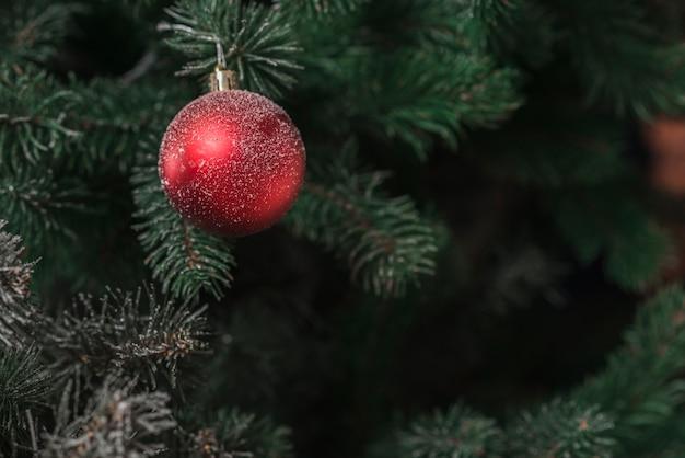 Jedlinowy drzewo z boże narodzenie piłką
