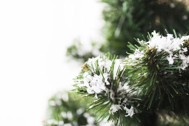 Jedlinowy drzewo z płatkami śniegu na gałązkach