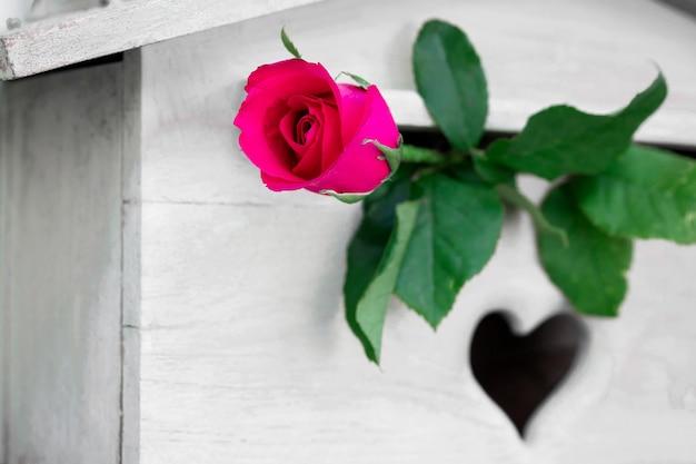 Jedna czerwona róża na skrzynce na listy. koncepcja walentynki