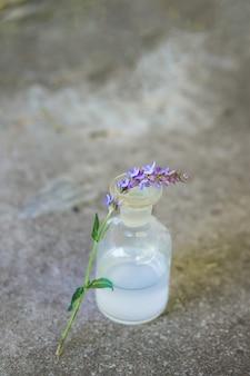 Jedna gałąź salvia pratensis, łąkowa lub szałwiowa fioletowe kwiaty w pobliżu butelki leku
