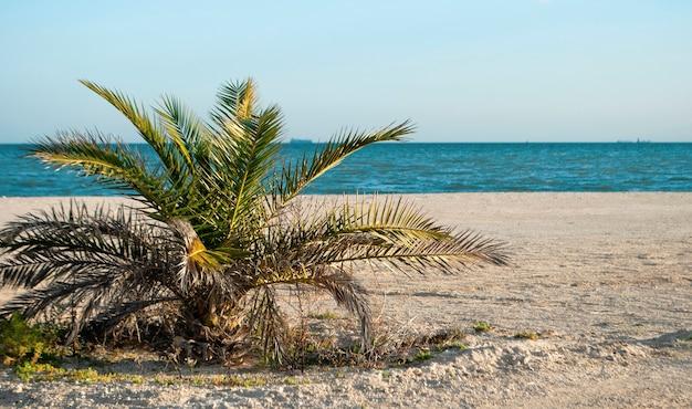 Jedna niska palma nad brzegiem morza śródziemnego na tle błękitnego nieba.