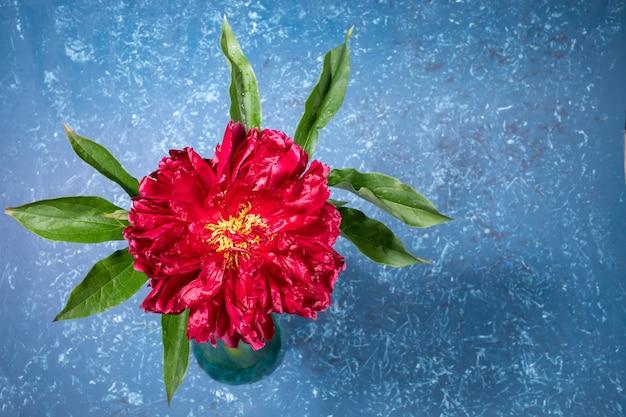 Jedna piękna czerwona piwonia na jasnym niebieskim tle z teksturą z bliska. jasna świąteczna kartka z życzeniami lub zaproszenie na dzień matki lub święta kobiet. orientacja pozioma. widok z góry, miejsce na kopię.