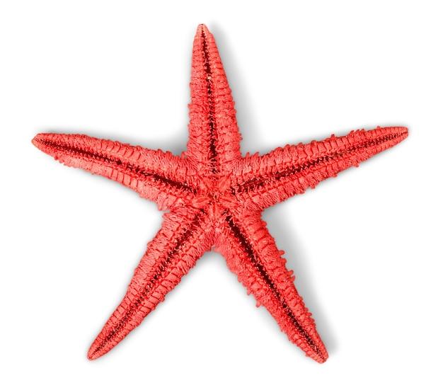 Jedna rozgwiazda na białym tle.