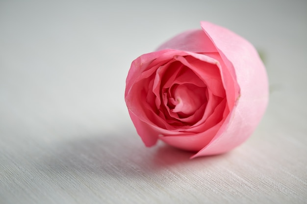 Jedna różowa róża na biurku