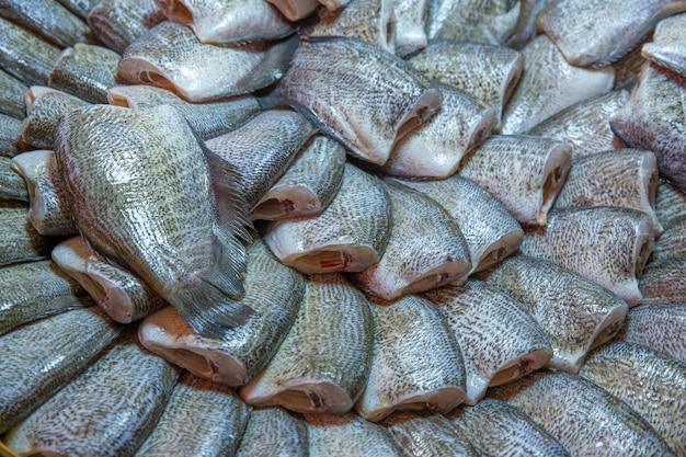 Jedna słoneczna ryba, snake skin gourami, selektywna ostrość.