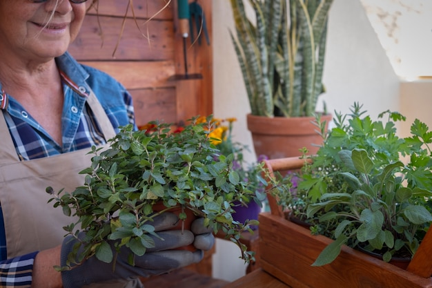Jedna starsza kobieta w swoim ogrodzie opiekuje się nowymi aromatycznymi roślinami. trzyma wazon ze świeżą miętą. drewniane rustykalne tło i stół