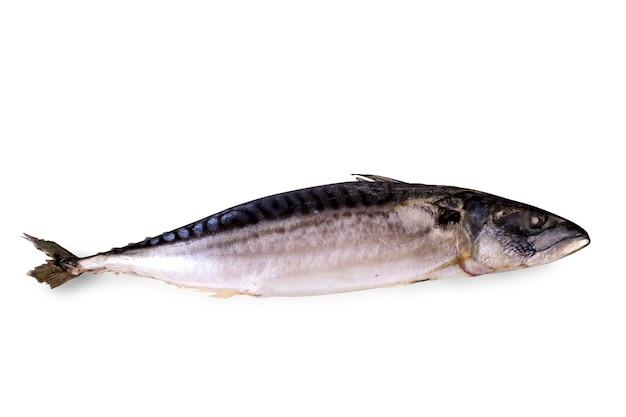 Jedna świeżo mrożona makrela na białym tle