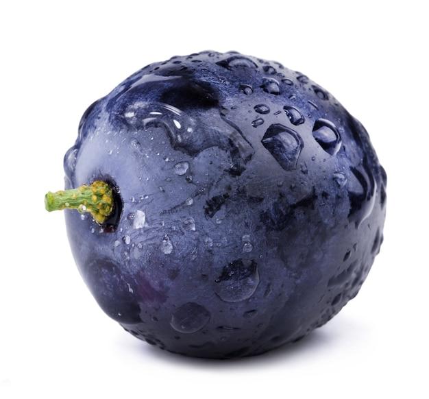 Jedno ciemnoniebieskie winogrono w kroplach wody izolowane