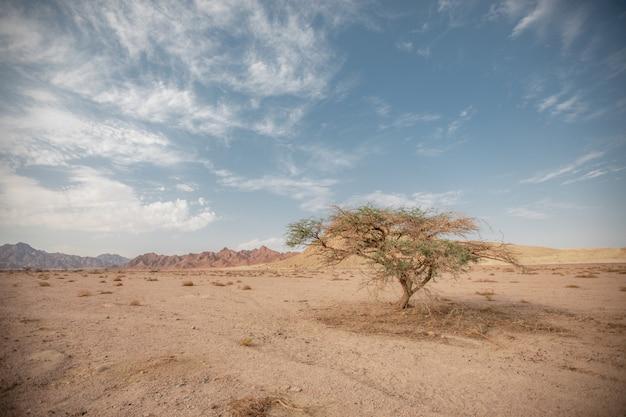 Jedno drzewo w suchym, piaszczystym pustym miejscu pośród wzgórz i chmur. samotne drzewo w suchym kurzu na tle odległych wzgórz i nieba