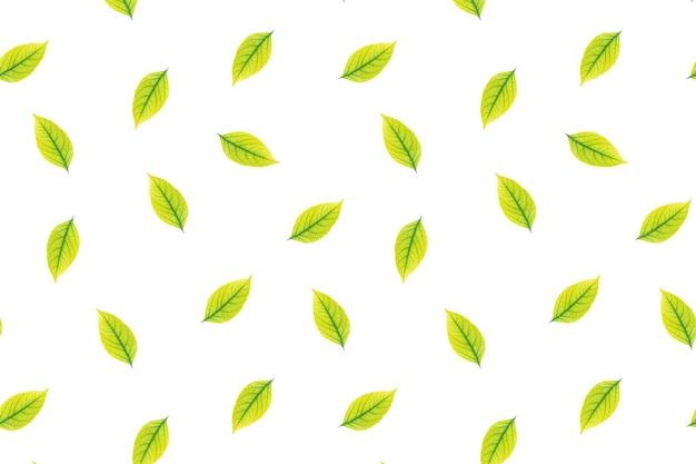 Jednolity wzór jesiennych liści na białym tle