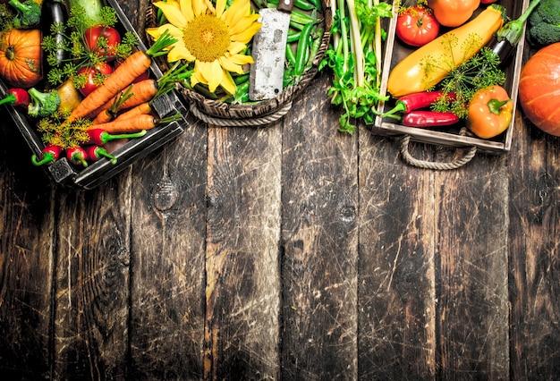 Jedzenie organiczne. świeże zbiory warzyw.