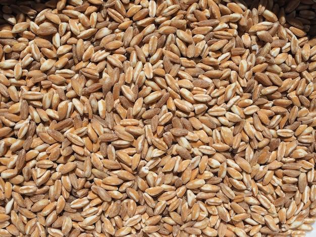 Jedzenie zbóż z pszenicy płaskurki