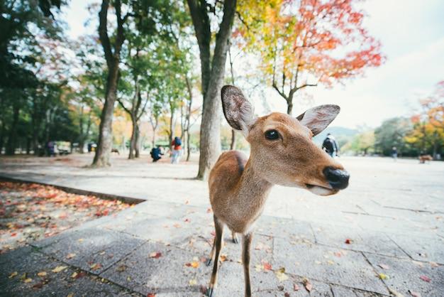 Jelenie i zwierzęta w parku nara, kioto, japonia