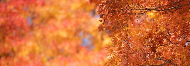 Jesień czerwoni liście klonowi z copyspace tłem.