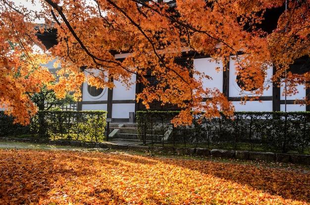 Jesień czerwony kolor opuszcza przy tofukuji świątynią w kyoto, japonia