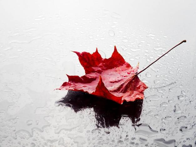 Jesień czerwony liść z podeszczowymi kroplami