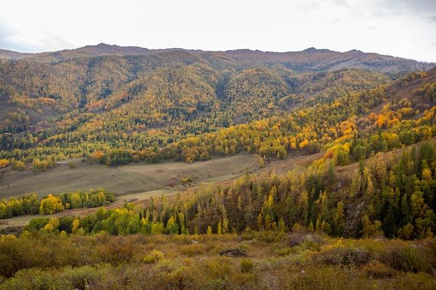 Jesień Górski Panoramiczny Krajobraz Premium Zdjęcia