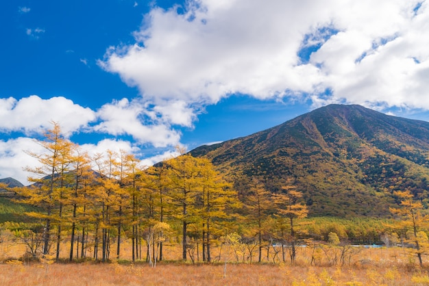 Jesień jesień krajobraz nikko japonia