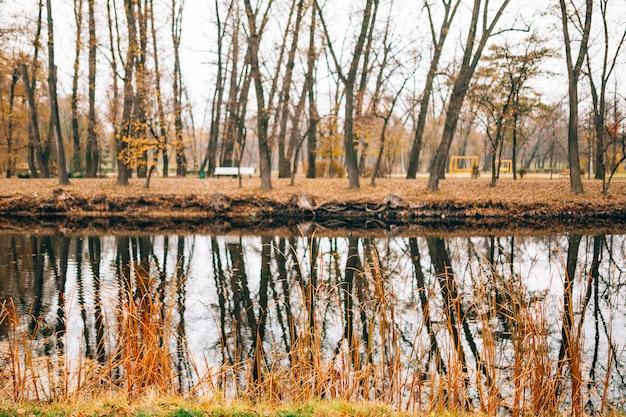 Jesień jezioro żółte liście jesienią