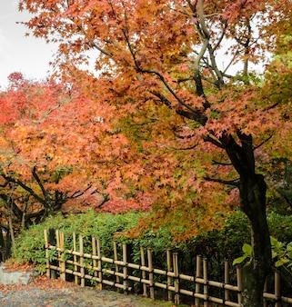 Jesień kolor opuszcza przy tofukuji świątynią w kyoto, japonia