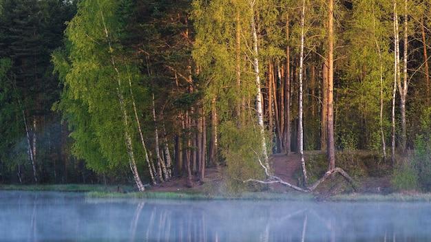 Jesień kolorowy krajobraz z mglistym jeziorem na tle lasu