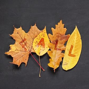 Jesień koncepcja. upadłe żółte liście z klonu, topoli, dębu i wierzby z napisem fall na tablicy.