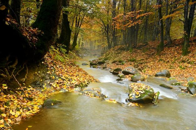 Jesień krajobraz górskiej rzeki w lesie