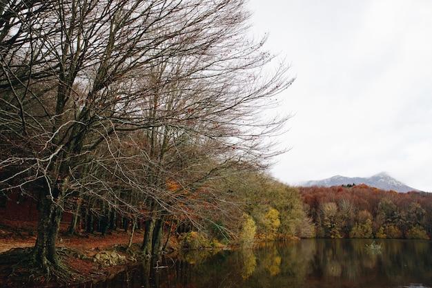 Jesień krajobraz kolorowy las i wodne odbicia w jeziorze