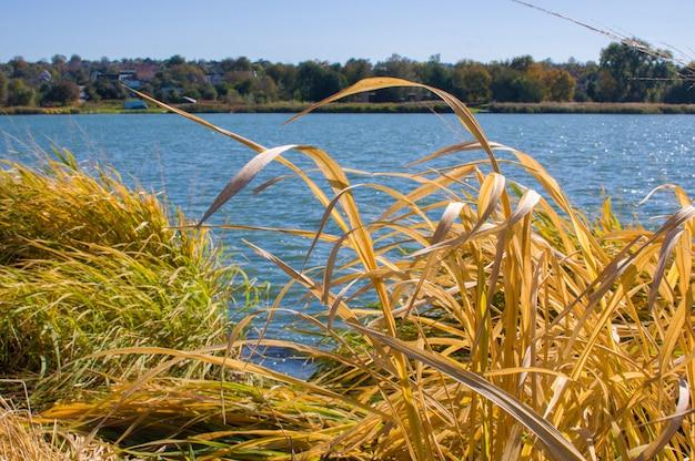 Jesień krajobraz na jeziorze. wiejskie niebo natury chmury rzeczny krajobraz i suche żółte trzciny. natura nad brzegiem rzeki. wiejski krajobraz rzeczny.