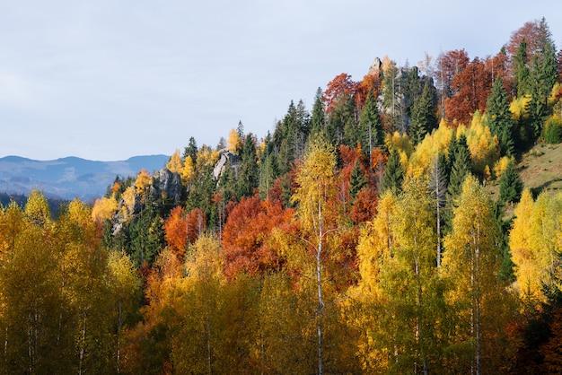 Jesień krajobraz w halnym lesie