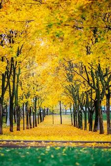 Jesień krajobraz w parku w moskwa