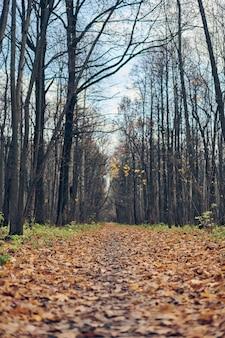 Jesień las chodnik z opadłych liści