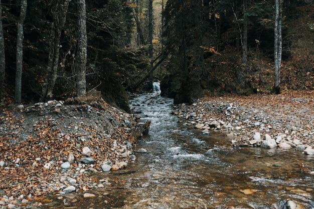 Jesień Las Natura Góry Rzeka świeże Powietrze Podróży Turystyka Premium Zdjęcia