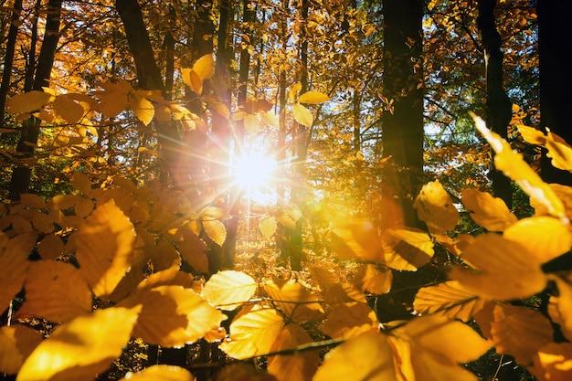 Jesień las w słoneczny dzień